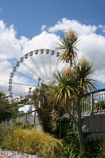 cabbage tree in Torquay